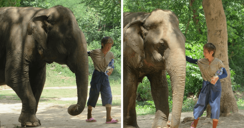 A female mahout guiding her blind elephant by the ear in Kanchanaburi