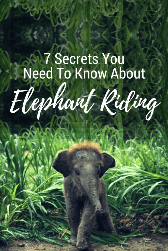 7 secrets you need to know before hopping onto an elephant!