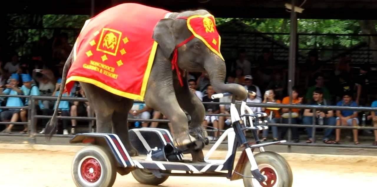 Nong Nooch Tropical Botanical Garden Elephant Show