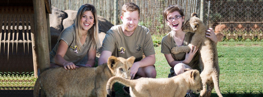 Volunteers at Lion Park, Johannesburg