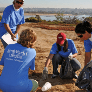 Volunteers beach cleaning with SeaWorld tees on