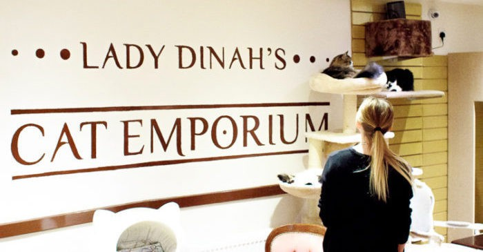 lady-dinahs-cat-emporium-11