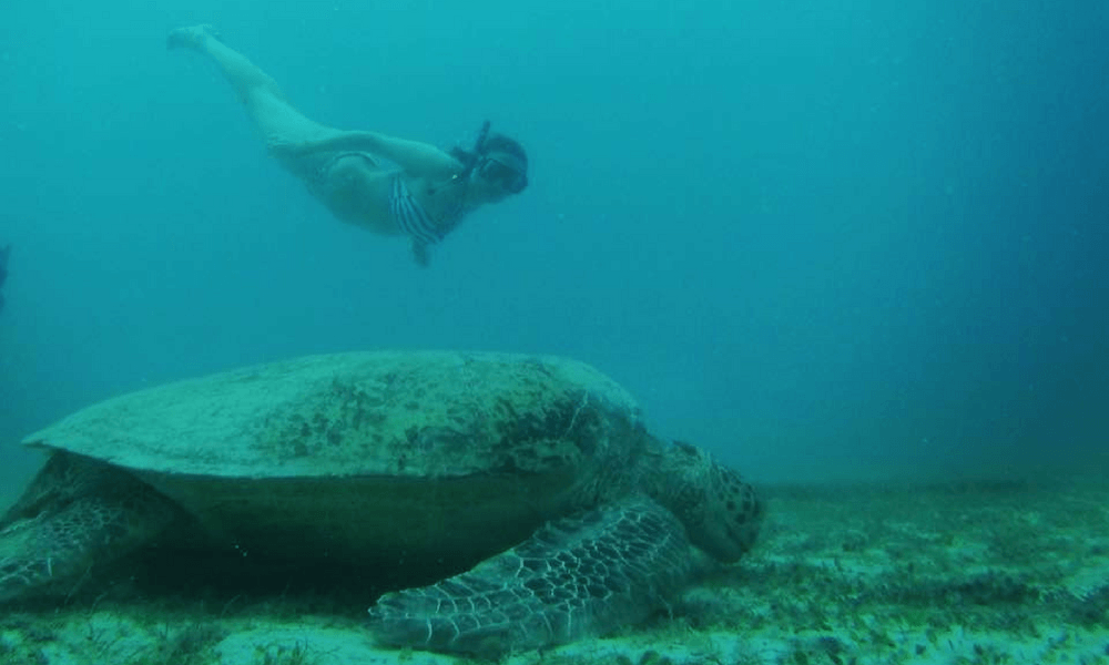 Surveying turtles for a conservation project in Malaysia.