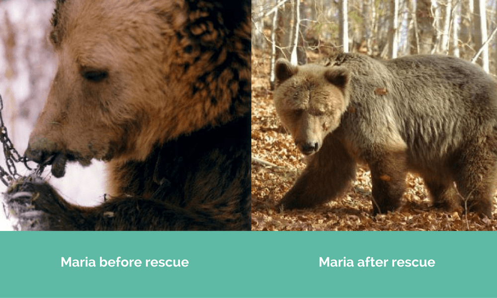 Maria before and after being rescued.
